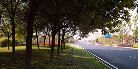 道路绿化养护清洗工程服务方案